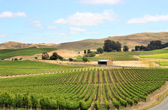 Vineyard field in napa valley Royalty Free Stock Photos