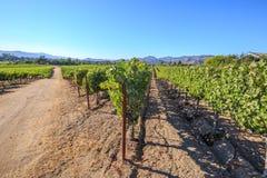 Vineyard field Napa Valley Royalty Free Stock Images