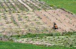 Vineyard field Paphos Cyprus Royalty Free Stock Photography
