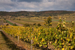 Vineyard fields. With the hills and dark clouds on the background stock photo