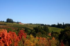 Vineyard Fields in Autumn Royalty Free Stock Images