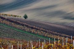 Vineyard and fields in autumn, South Moravia.Czech Republic. Moravian vineyard and fields in autumn, South Moravia.Czech Republic royalty free stock photo