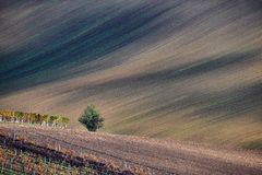 Vineyard and fields in autumn, South Moravia.Czech Republic. Vineyard and fields in autumn, South Moravia.Czech stock image
