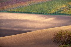 Vineyard and fields in autumn, South Moravia.Czech Republic. Vineyard and fields in autumn, South Moravia.Czech stock photo