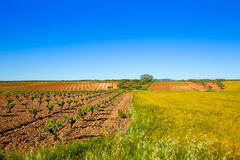 Vineyard fields in Extremadura of Spain. By via de la Plata way royalty free stock photography