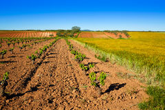 Vineyard fields in Extremadura of Spain. By via de la Plata way royalty free stock photos