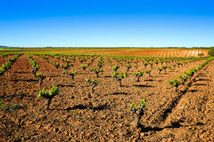vineyard fields in Extremadura of Spain royalty free stock images