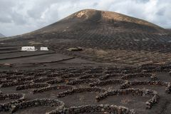 Vineyard fields and farmer`s house, Lanzarote. Typical black vineyards, stone walls, lava fields, wintertime, Lanzarote, the Canary Islands royalty free stock photo