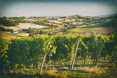 Vineyard fields in front of Morro d'Alba in Marche, Italy. In vintage style royalty free stock images