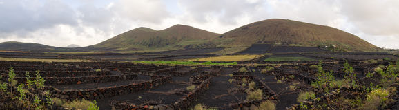 Vineyard fields in Lanzarote, Spain panorama. Typical black vineyards, stone walls, lava fields - Canary Islands royalty free stock photo