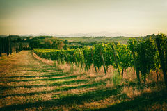 Vineyard fields in Marche, Italy. Vineyard fields in vintage style in Marche, Italy royalty free stock photos
