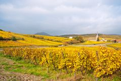 Vineyard fields near small old town, Europe. Autumn vineyard with a village in the background stock photos