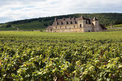 Vineyard fields old chateau Burgundy, France Stock Photography