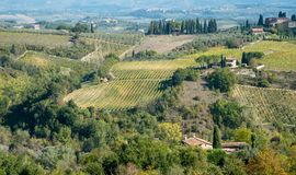 Vineyard fields in San Gimignano, Tuscany area, Italy. Beautiful vineyard fields in San Gimignano,Tuscany area, Italy early in October royalty free stock images