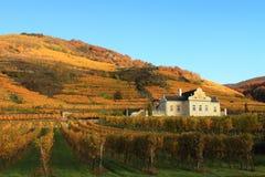 Vineyard in Flachau in Austria. Over river Donau royalty free stock photography