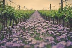 Vineyard flowers Stock Images