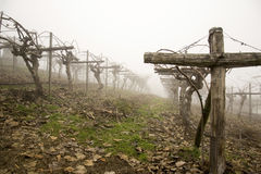 Vineyard in the fog Royalty Free Stock Image