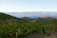 Vineyard at the foot of the mountain. With a big cloud Stock Photo