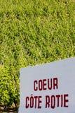 Vineyard in France. Grand cru vineyard, Cote Rotie, Rhone-Alpes, France Stock Image