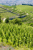 Vineyard in France. Grand cru vineyard, Hermitage, Rhone-Alpes, France Royalty Free Stock Photos