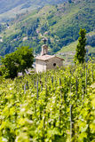 Vineyard in France. Grand cru vineyard and Chapel of St. Christopher, Hermitage, Rhone-Alpes, France Stock Photo