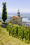 Vineyard in France. Grand cru vineyard and Chapel of St. Christopher, Hermitage, Rhone-Alpes, France Royalty Free Stock Photography