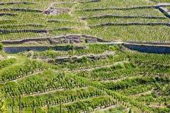 Vineyard in France. Grand cru vineyard in Hermitage, Rhone-Alpes, France Stock Images