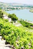 Vineyard in France Royalty Free Stock Photos