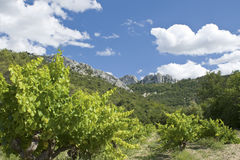 Vineyard in France. Vineyard from Gigondas. Rhone. France stock image