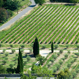 Vineyard in France. Vineyard in French landscape in birdview Stock Images