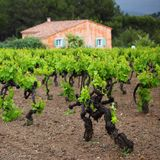 Vineyard in france Stock Photography