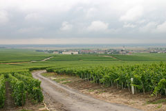 Vineyard in France. Road through vineyard in Champagne, France Royalty Free Stock Images
