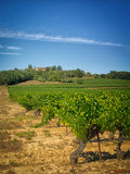 Vineyard in France. Royalty Free Stock Photos