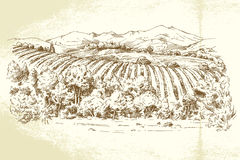 Vineyard France Stock Images