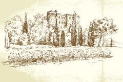Vineyard France. Hand drawn illustration Royalty Free Stock Images