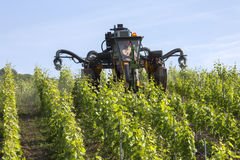 Spraying Insecticide - Vineyard - France Stock Image