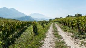 Vineyard in France (1) Stock Image