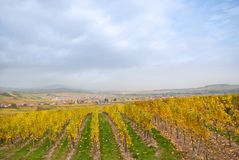 Vineyard in France near small old town Royalty Free Stock Image