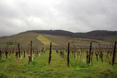 Vineyard in France. Rainy season in Alsace area. Grape fields for French vine production stock image