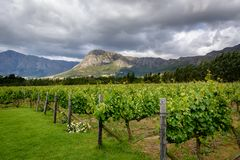 Vineyard in Franschhoek Winelands valley in South Africa. A vineyard in Franschhoek Winelands valley in South Africa. Horizontal photo on a cloudy day Stock Images