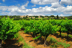 Vineyard in french countryside Stock Photos