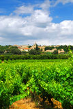 Vineyard in french countryside Royalty Free Stock Image