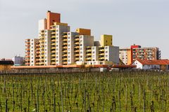 Vineyard in front of a housing complex in Worms. Germany Royalty Free Stock Photo