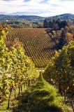 Vineyard in Germany Royalty Free Stock Photos