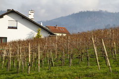 Vineyard in Germany. White house, grass, mountain Stock Image