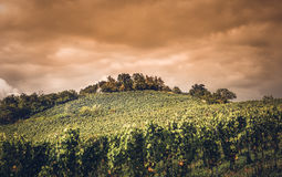 Vineyard in germany Royalty Free Stock Photos