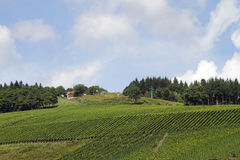 Vineyard in Germany Royalty Free Stock Photography