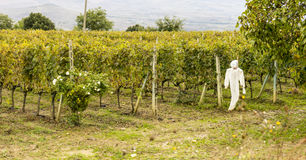 Vineyard and ghost Royalty Free Stock Photos