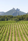 Vineyard in Gigondas. Provence. Royalty Free Stock Photo