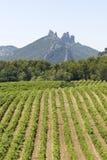 Vineyard in Gigondas. Provence. Gigondas vineyard with mountain, from Provence. France royalty free stock photo